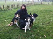 Paula and the collie pack