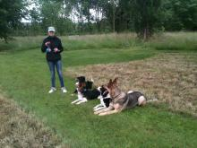 Sally and the collies