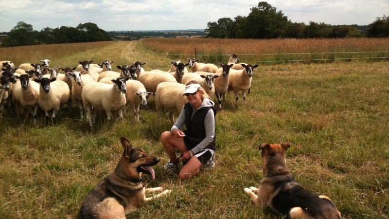 Sally Barnes with her dogs in a field of sheep