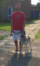 Dave and Chi the Husky/Atika Rescue Dog cross