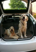 Archie the Retriever and Daisy the Wheaten Terrier